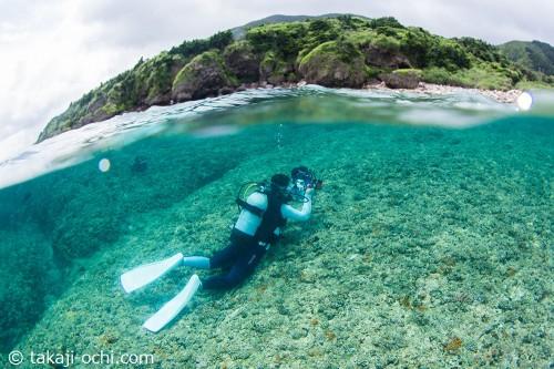足の着く浅さのところにはいつくばって撮影した、ミヤコキセンスズメダイの幼魚