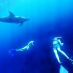 オーシャナ講師陣&御蔵島のイルカ。こんな風にゆったりと水中を楽しむことを目指しましょう♪