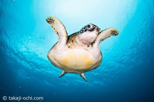 呼吸を終えて、海底に戻ってきたカメ吉