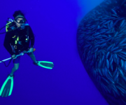 前の記事: 海洋関連の仕事をしている女性のためのイベントが開催! 〜Wo