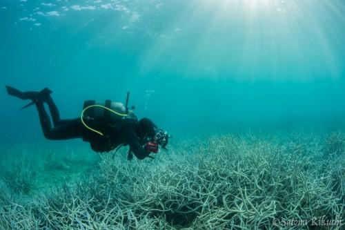 きらきらの海の中で、サンゴを撮りながらにやにやしているであろう、むらいさちさん