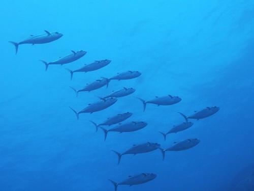 見られたのは全部で15匹。 おっちゃん、水中でちゃんと数えてくれました。