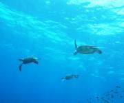 前の記事: 1ダイブでカメが20匹! 噂のダイビングポイント「あやまる岬