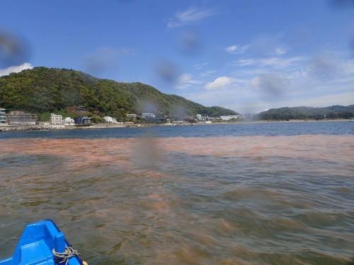 陸から撮った赤潮の様子