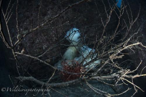 例年、3月ごろ、山から切り出した木が、産卵床ととして設置されている