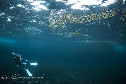 外洋から流されてきた漂着物の中を探す