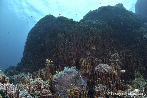 珊瑚が生き生きとした辺野古の海 / 中村卓哉さん撮影