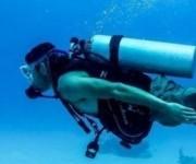 前の記事: UNEP本部とスキューバダイビング業界が、美しい海のために動