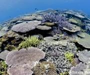 前の記事: 「撮ってみたいサンゴの海がある」〜 むらいさち×中村卓哉 辺