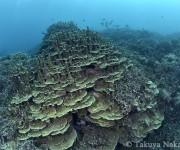 """前の記事: """"サンゴ博物館""""と呼ばれる辺野古のボートポイント「中ノ瀬」に"""