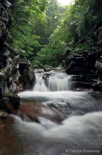 大浦川上流の森を流れる清流