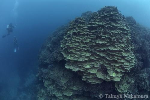 中ノ瀬のサンゴ博物館と呼ばれる海の景観