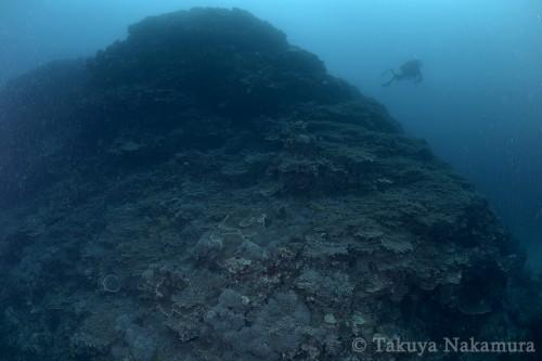 さまざまなサンゴで覆われた巨大な山