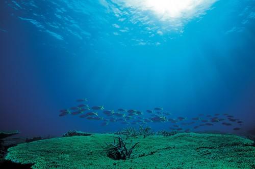 静まり返った海中。私の大好きな魚たちが音もなく通り過ぎる。澄み渡る海中に柔らかな光が注ぐ。もうこれ以上のものは必要ない。