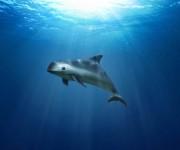 次の記事: メキシコのコガシラネズミイルカを救うための最後の取り組み