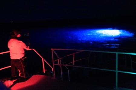 船上から海中に設置されたライトを眺める