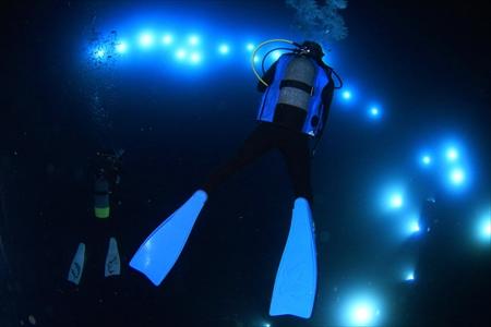 海中に煌々と設置された、水中ライト