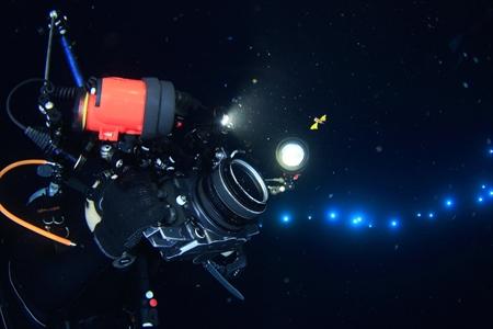 クダリボウズギス属の一種の稚魚を撮影する、峯水カメラマン