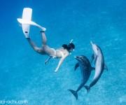 次の記事: 「イルカも人も大騒ぎ!?」2017バハマ・ドルフィンクルーズ