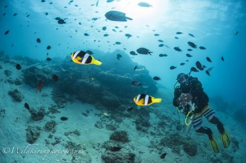 こちらは水深6mでの安全停止中で魚も多い