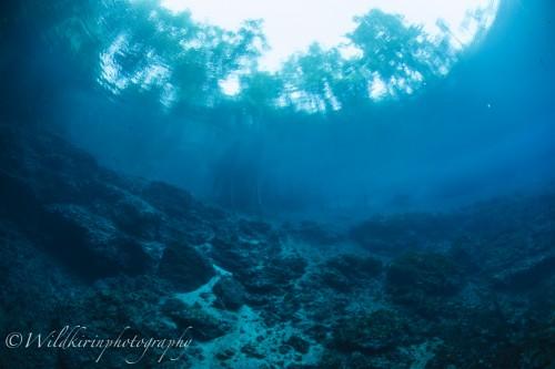 素潜りで水底まで行き、下から撮影