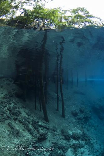 水中から外が鮮明に見えるほど