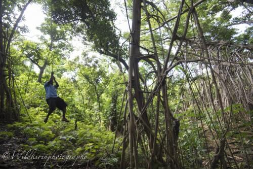 ジャングルの中でバンヤンツリーの根っこでリアルターザン