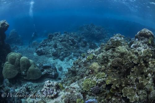 ブルーホールの中は水深が4〜5mぐらいで自然光も入ってきて、美しいサンゴが待っている