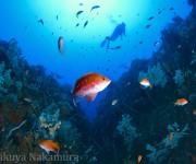 次の記事: 鳥取・田後の未開のダイビングポイント「イトグリ」の全貌を探れ