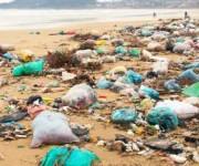 前の記事: コスタリカ、世界で初めて、あらゆる使い捨てプラスチックの禁止