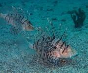前の記事: 【募集】海の環境保全を考えよう〜JCUEセミナー「海洋生物と