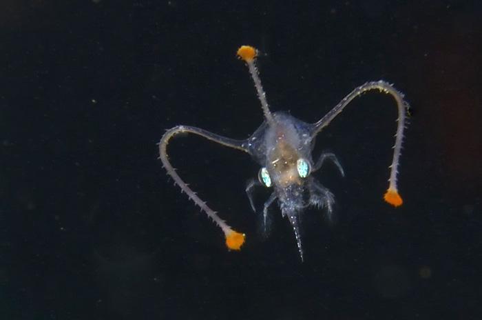 海洋写真家・吉野雄輔さんの写真と文による「海のかたち ぼくの見たプランクトン」が発売