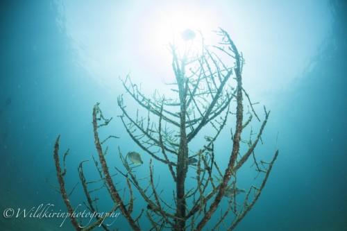 ツリー漁礁には幼魚などが棲み着いているのでじっくり生物を探そう