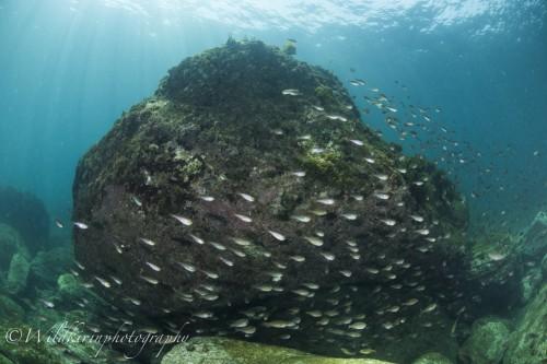 Fukuura Underwater Complete_2