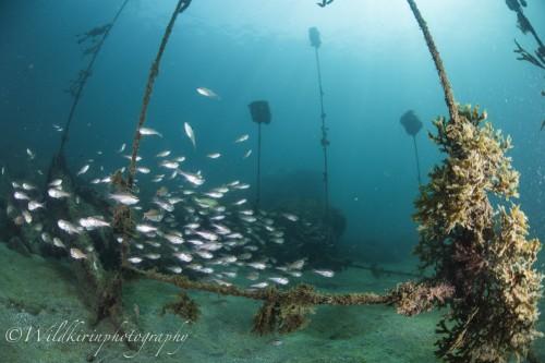 Fukuura Underwater Complete_22