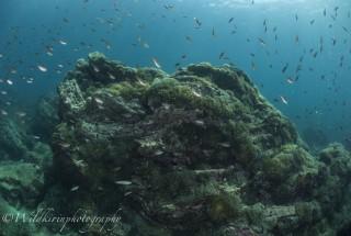 Fukuura Underwater Complete_40