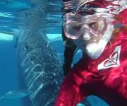 前の記事: Q. サメについて、あなたの意識を教えてください! 〜世界的