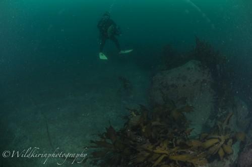Ishibashi Underwater Complete_19