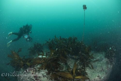 Ishibashi Underwater Complete_24