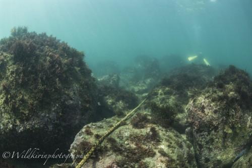 Ishibashi Underwater Complete_48