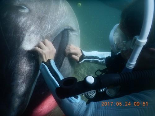 引き上げ作業中に外部形態の観察をする沼口さん(写真提供/波左間海中公園)
