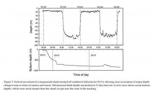 1997年にメガマウスザメをトラッキング調査した結果、夕方6時〜朝方6時までは表層におり、日中は水深120〜166mあたりにいることがわかった。海底の水深は800m前後の海域だったが、166mより深くにはいっていない。(*1)