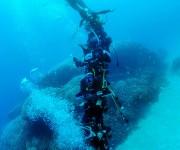 前の記事: 「奄美の海へいらっしゃーい!」 奄美最大級のコモンシコロサン