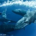スライドトークショーのクジラ(撮影:越智 隆治)