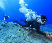 前の記事: ドリフトダイビングの潜り方および注意点について
