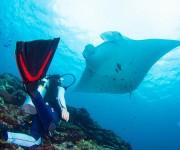 次の記事: 【アンケート】あなたが選ぶ、ダイビングNo.1の沖縄の島はど