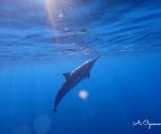 前の記事: 小笠原愛と行く、海も陸もまるごと満喫! ハワイ島ドルフィンス