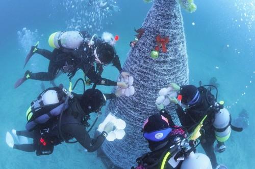 伊豆海洋公園クリスマスツリー(撮影:寺山英樹)