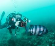 次の記事: 【江之浦】充実のガイドロープ・ダイビング ~待っているのは、
