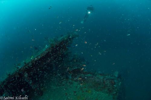 熱海の沈船(撮影:菊地聡美)